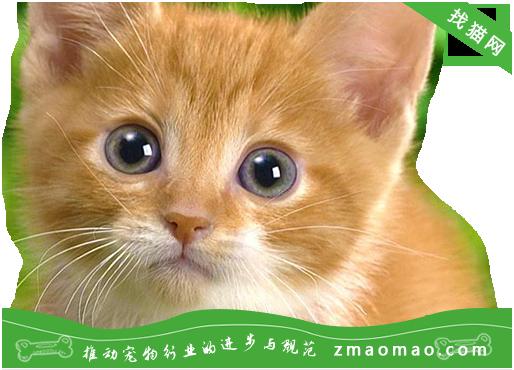 猫咪内寄生虫病之绦虫病的症状及防治方法