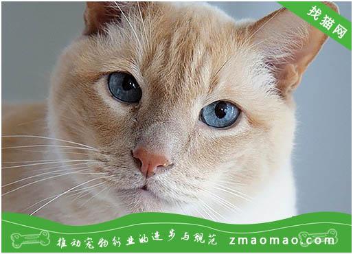 猫咪误食磷化锌老鼠药中毒的症状及治疗方法