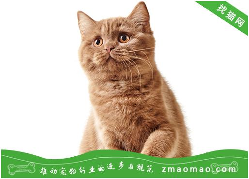 猫咪患烟酸缺乏症的症状及预防治疗方法