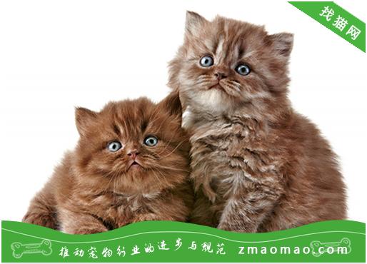 猫咪异常分娩(难产)的症状及处理异常分娩母猫的方法
