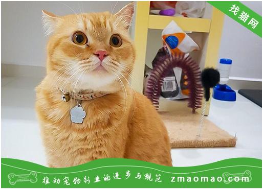 怎么治疗猫咪内耳炎?猫内耳炎有什么症状