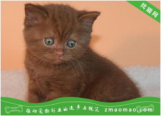 猫咪脂肪瘤有哪些症状?常在老年动物身上出现的一种疾病