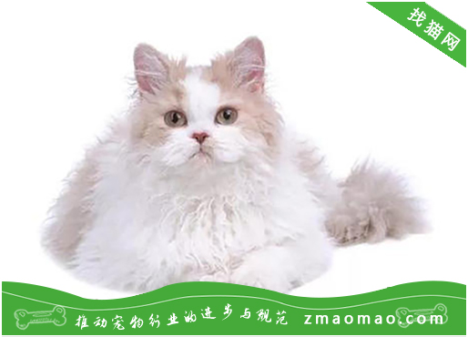 公猫绝育后性格会变化吗?