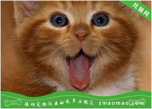 波斯猫的遗传病多囊肾的症状