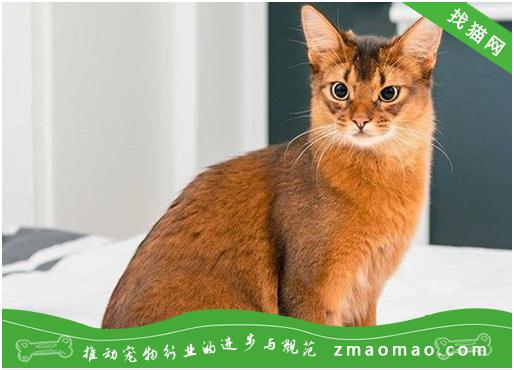 适宜猫咪的活血祛瘀中药