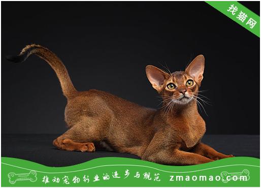猫咪的疱疹病毒(猫鼻肺炎病毒)的症状及治疗方法