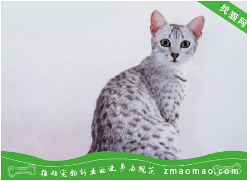猫咪酸碱紊乱之猫咪代谢性酸中毒的案例分析治疗