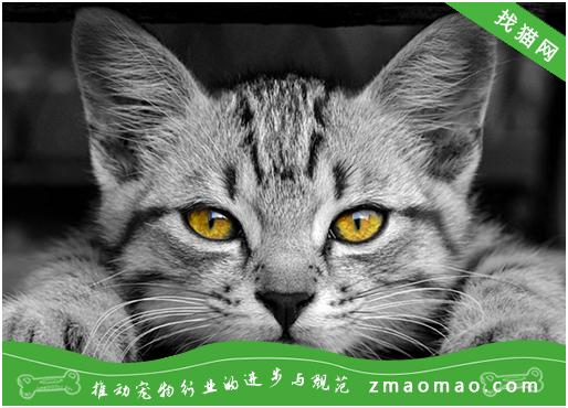 如何提高猫咪对疾病的抵抗力?初生猫咪的抵抗力很差