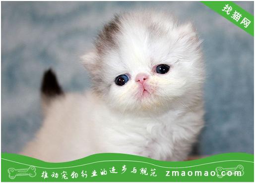 猫咪甲状腺机能亢进怎么预防和治疗呢?