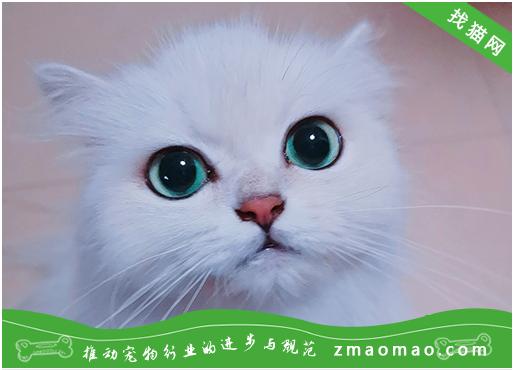 常见的猫癣治疗方法及注意事项