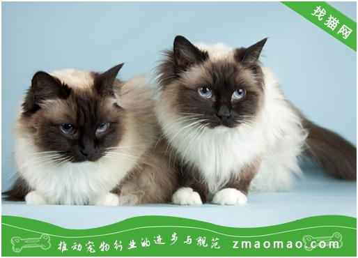 幼猫感染皮肤病怎么办?幼猫常见的皮肤病