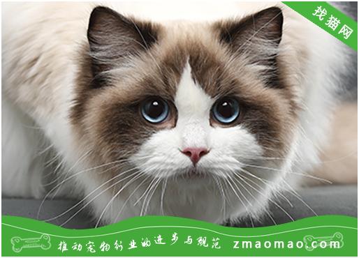 猫咪为什么会流产?如何预防母猫流产?