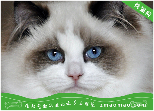猫咪呕吐吐黄水怎么办?引起的原因和治疗办法