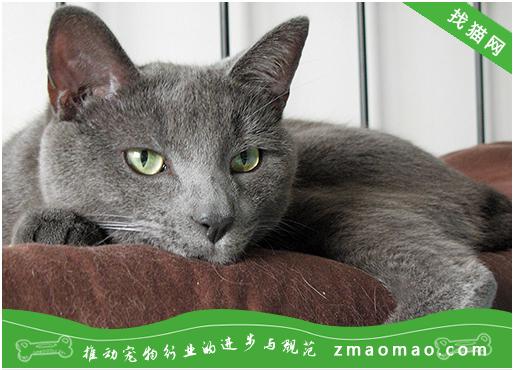 猫咪在手术前需要准备什么?生理性手术、病理性手术