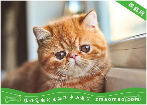 猫咪排便困难常用的泻药有哪些?