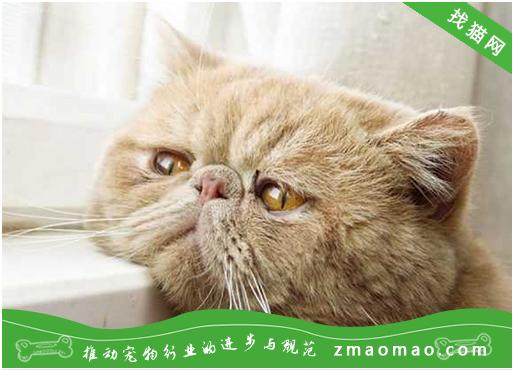 怎么预防猫咪的新生儿溶血症?注意鉴定猫的血型