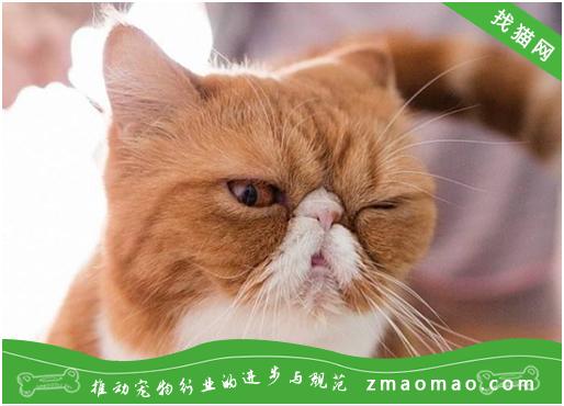 改善老年猫咪的骨关节炎有什么方法