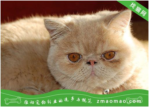 日光照射紫外线会对猫咪皮肤产生哪些损害