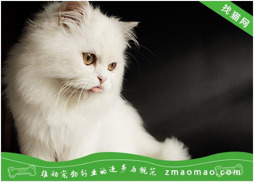 给猫咪驱虫可以用哪些中药?南瓜子,大蒜,使君子等