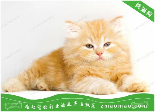 猫咪发热的原因有哪些?