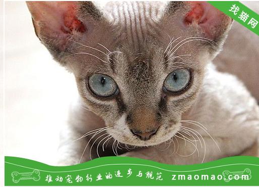 猫肛门囊肿的诊断与治疗方法