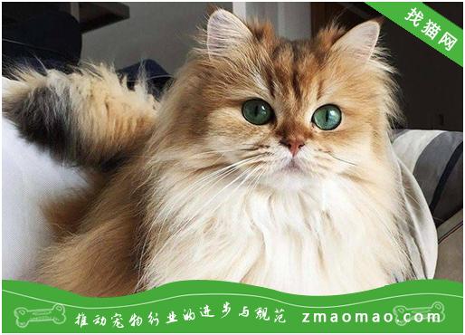 老年猫咪易患关节病?<a href=