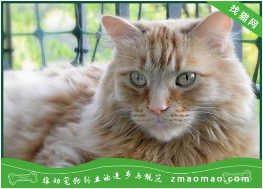 猫咪营养不良怎么办?如何判断猫咪营养不良?