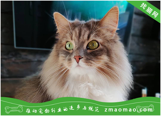 如何给猫咪安全地打疫苗?核心疫苗和非核心疫苗有哪些