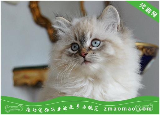 为什么要给猫咪定期检查?体检多久看一次