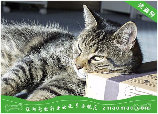 猫咪的常见脊椎疾病及脊柱疾病的诊断