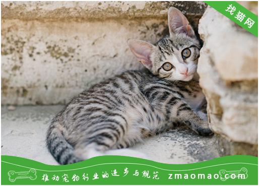 猫咪为什么会脱肛? 发现脱肛之后怎么办?