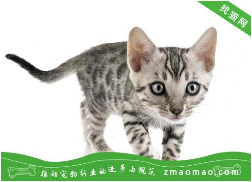 猫咪急性肾功能衰竭有什么症状?怎么治疗