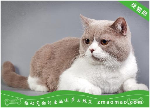 猫披衣菌肺炎的症状及治疗