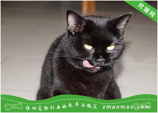 英国短毛猫的遗传疾病有哪些?