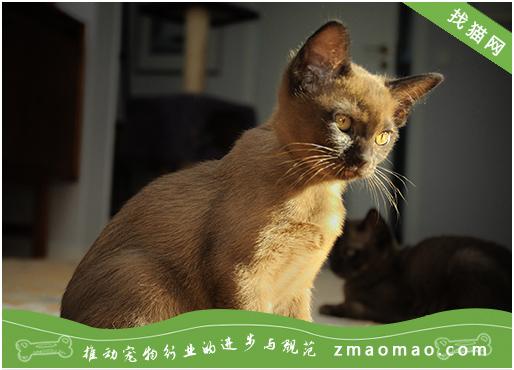 猫咪总是流眼泪?常见原因为结膜炎或者鼻泪管阻塞