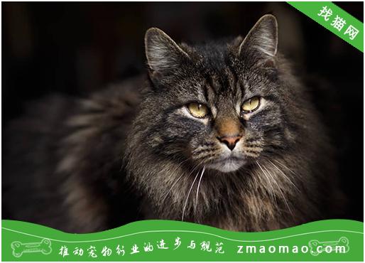 猫咪产后缺钙的临床症状及治疗方法