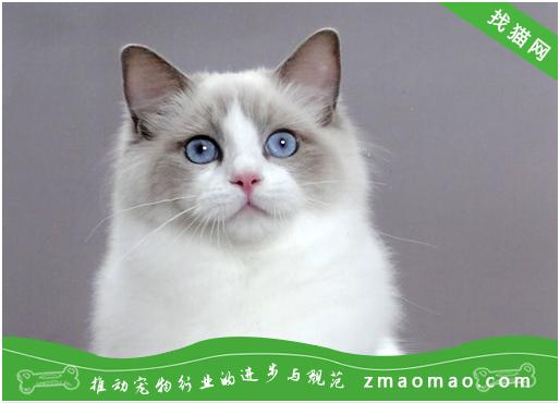 【猫饭攻略】自制猫咪爱吃的蒸南瓜