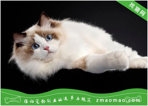 【猫饭攻略】自制猫咪鸡胸肉蒸饭