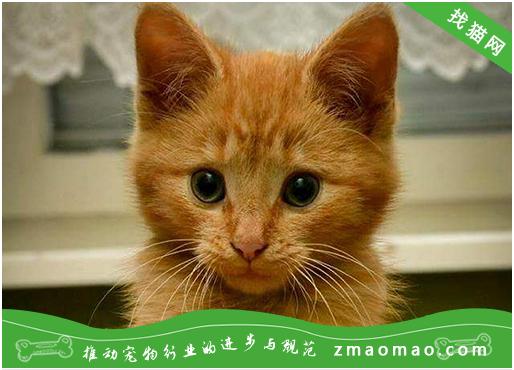 【猫饭攻略】自制猫咪鳕鱼餐