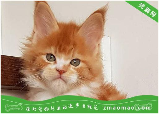 【猫饭攻略】自制猫咪补钙饭
