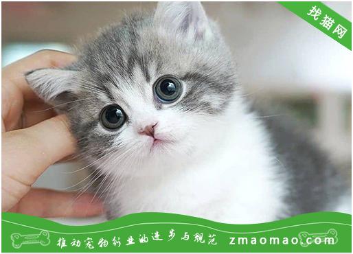 【猫饭攻略】自制猫咪鸡肉起司饭