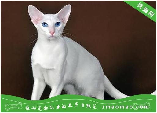 【猫饭攻略】自制猫咪鸡肉南瓜丸子