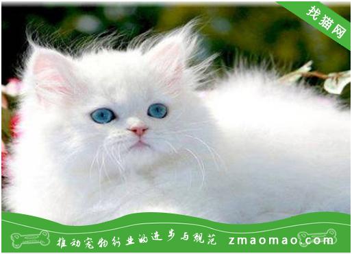 【猫饭攻略】自制猫咪香米鸡丝小鱼干