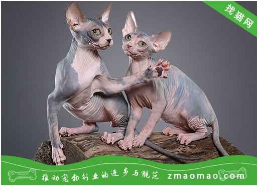 【猫饭攻略】自制猫咪鳕鱼蛋花汤