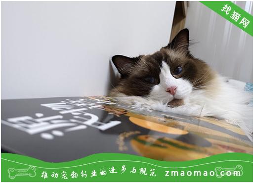 【猫饭攻略】自制猫咪秋刀鱼牛肉猫粮