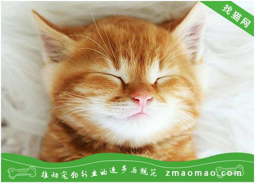 【猫饭攻略】自制猫咪的土豆草鱼饭