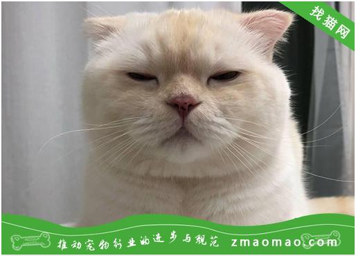 【猫饭攻略】自制鸭肉美毛猫饭