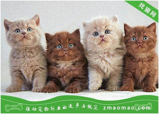 【猫饭攻略】自制猫咪的牛肉奶酪饭