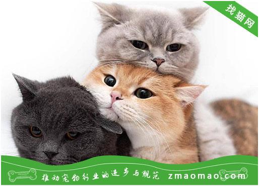 【猫饭攻略】自制猫咪的秋刀鱼饭