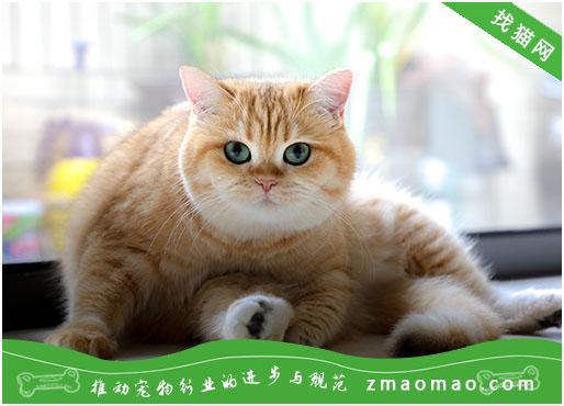 【猫饭攻略】自制猫咪的黄骨鱼鸭心饭